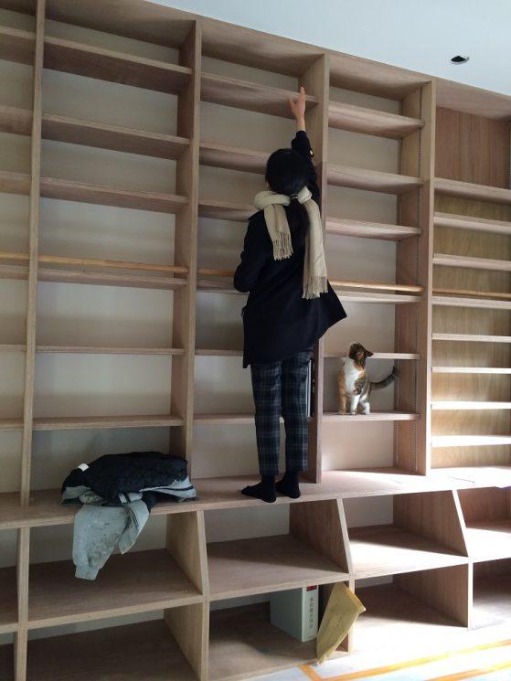 本棚で過ごす猫
